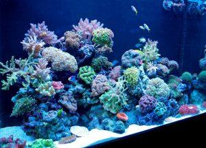 Corals Aquarium