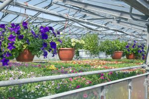 garden centre wholesale suppliers