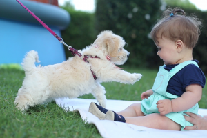 Be A Lovable Fur Parent Feed Your Fur Babies Healthily