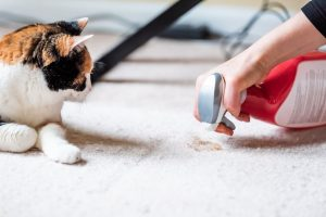pet cleaning products