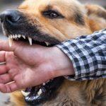 dog bites treatment