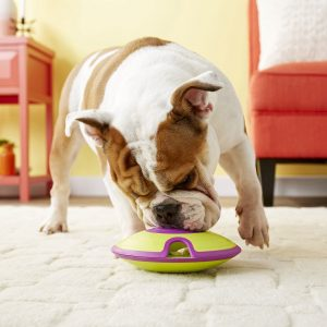 Reliable Outlet to Purchase Dog Supplies In Australia
